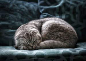 Senior Cats need quiet and comfortable place to rest
