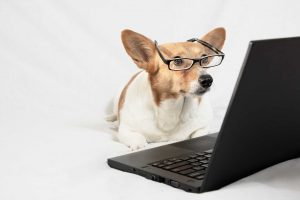 Front Street Animal Hospital Offers Telehealth Service