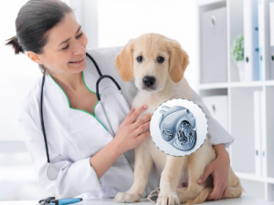 Heartworm Disease Questions and Answers