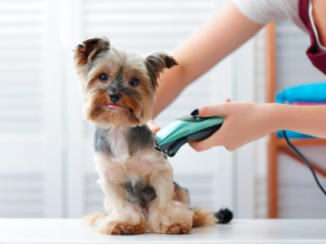 Shave your pet